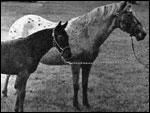 Chata F-3305, foal Picos Roxie