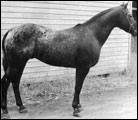 Little Bull F-1862