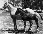Minidoka  Babe F-4853 and foal Minidoka Bill