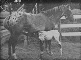 Naponee and 1960 foal, Malheur's Quiviran Naponee