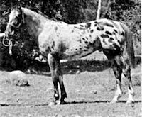 Cojo Blitz Jr F-1941