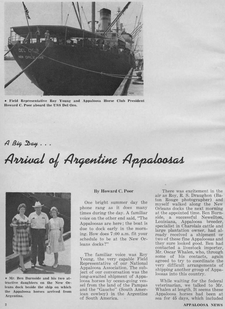 Argentine Appaloosas
