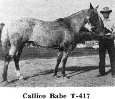 calicobabenf2027