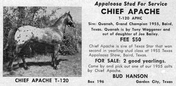 chiefapachet120