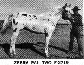 zebrapaltwo2