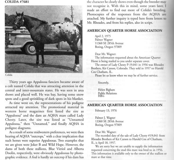 Colida, Appaloosa Stallion