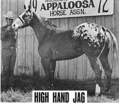 High Hand, Appaloosa Stallion