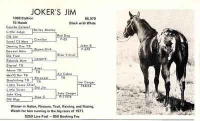 Joker B, Appaloosa Stallion