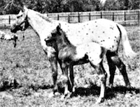 Sage Acre's Pride and foal