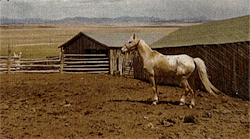 the Newkirk stallion
