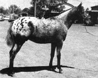 copperhead1923a