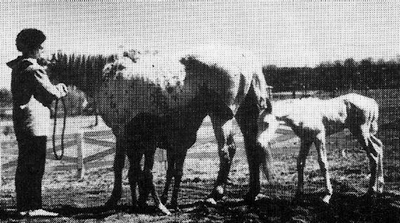 dapplest1896