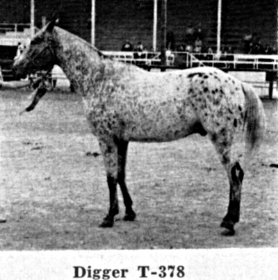 diggert378
