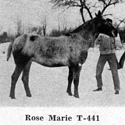 rosemariet441