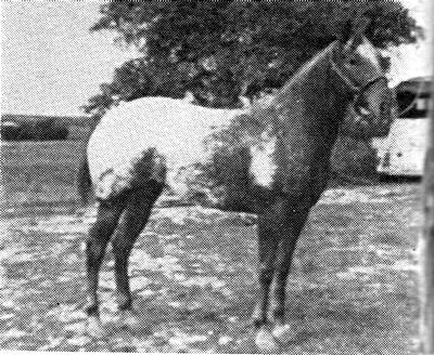 wohelo1939