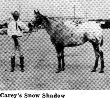 careyssnowshadow3045